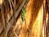 w-geckoonfrond