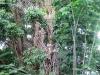 poor-bodhi-tree