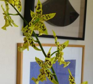 Janes flowers