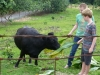 Ezra and Jonah feeding Lenore\'s cows