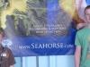 Seahorse Farm