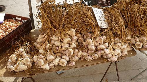 from the garlic Farmer near Beaune