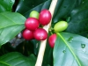 xmas-morning-coffee