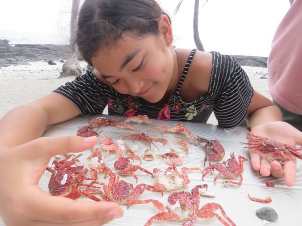 maylea-and-her-crab-family